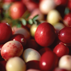 Cranberry, Cassis & Pine